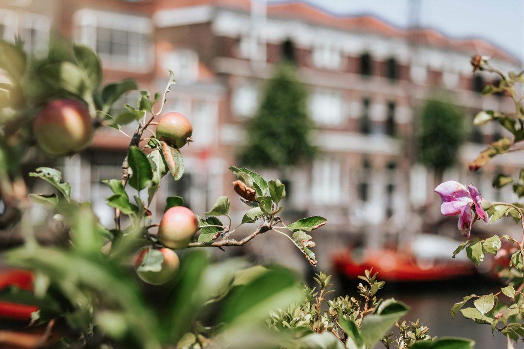 Rotterdam Stories - A walk through Delfshaven Visual Stories [.nl] Photography Micheile Henderson
